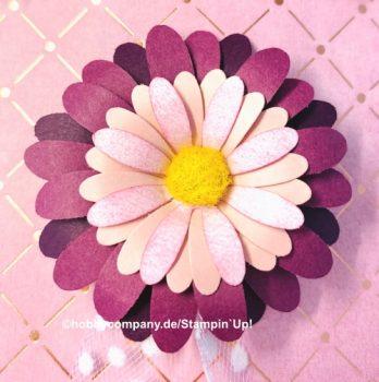 Hintergründe gestalten mit Gänseblümchen